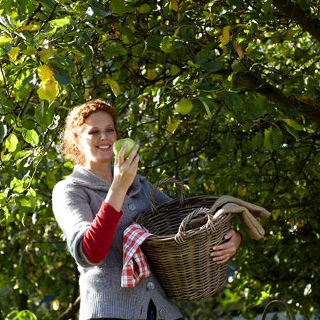 Tuinplant van de Maand augustus: fruitboom