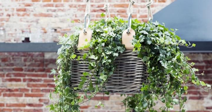 DIY-tip: Hippe hanging basket voor je Klimop