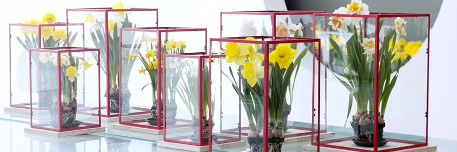 Narcis: Woonplant van de maand februari 2016