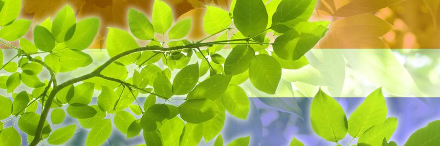 Verbetering huis: verandering tuin heeft grootste voorkeur