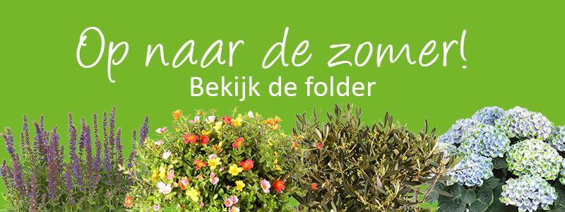 Breng kleur in uw tuin met deze aanbiedingen!