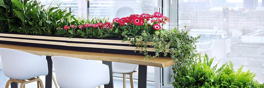 Zuiver groen: woonplanten van oktober