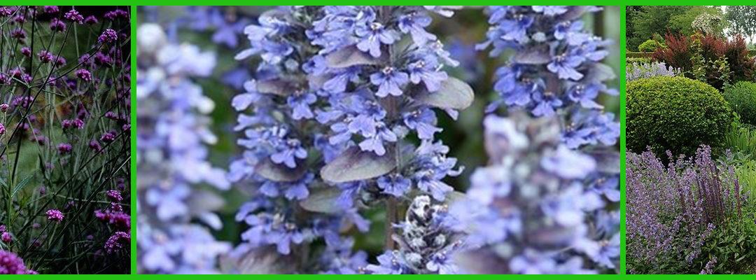 Vlinders verleiden met nectarplanten