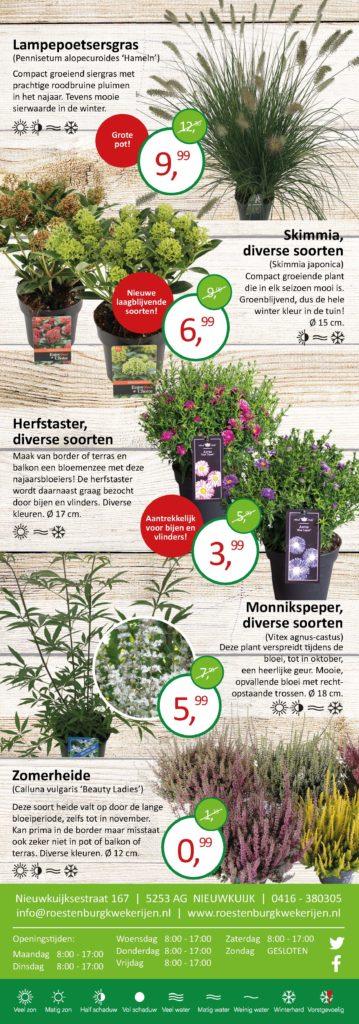 Folder bergthee, heide, gras aanbiedingen Roestenburg kwekerijen