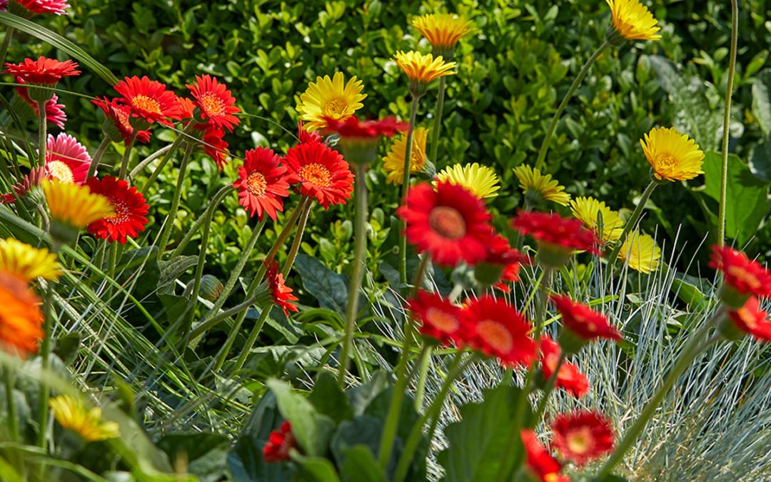 Breng kleur in je tuin!